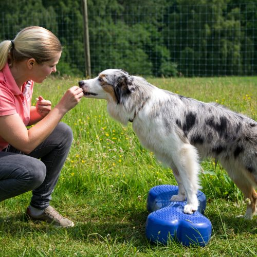 Hundefitness, Muskulatur aufbauen Hund