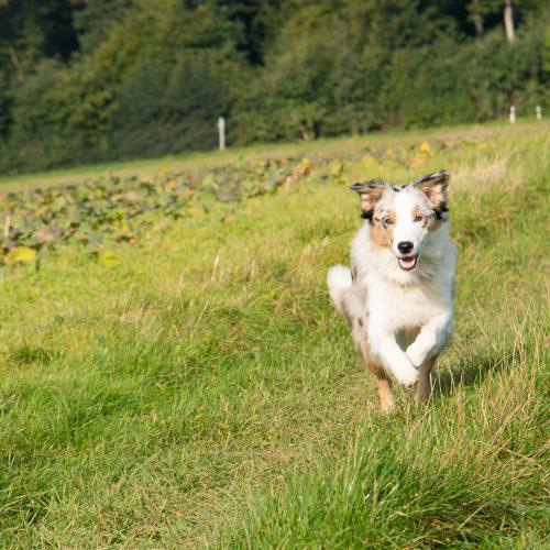 Hunde Fitness, gesunder Hund