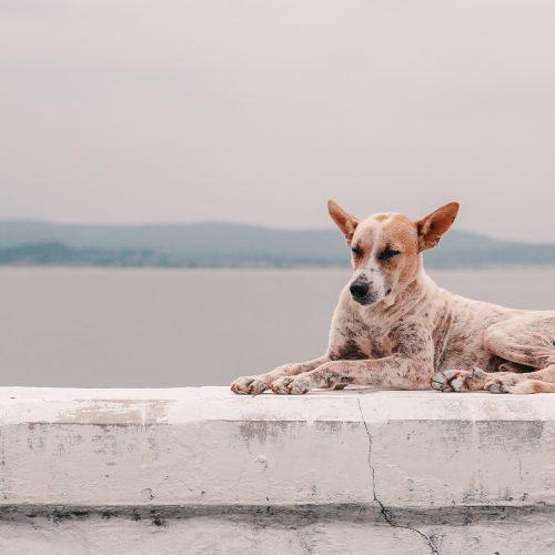 Hund mit Arthrose, Hunde fit bekommen